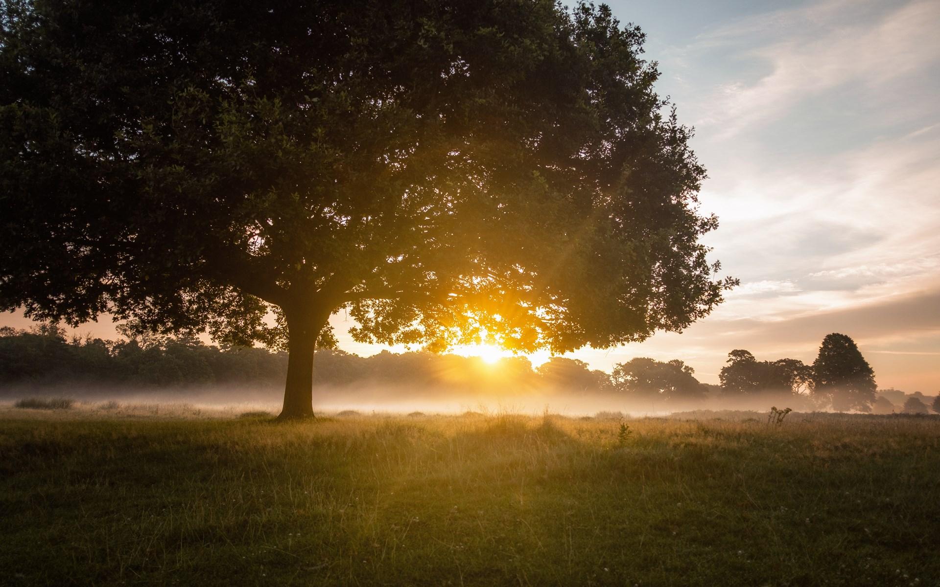 Tree in Pasture
